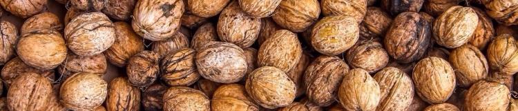 walnuts-1354819_1280