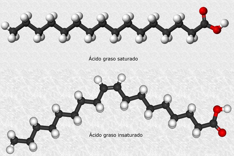 acidos grasos_wikimedia